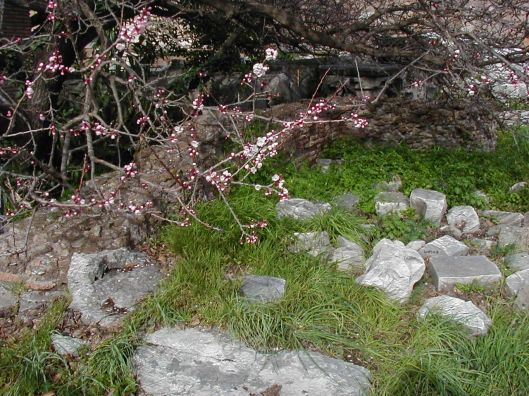 Spring flowers emerging over ruins