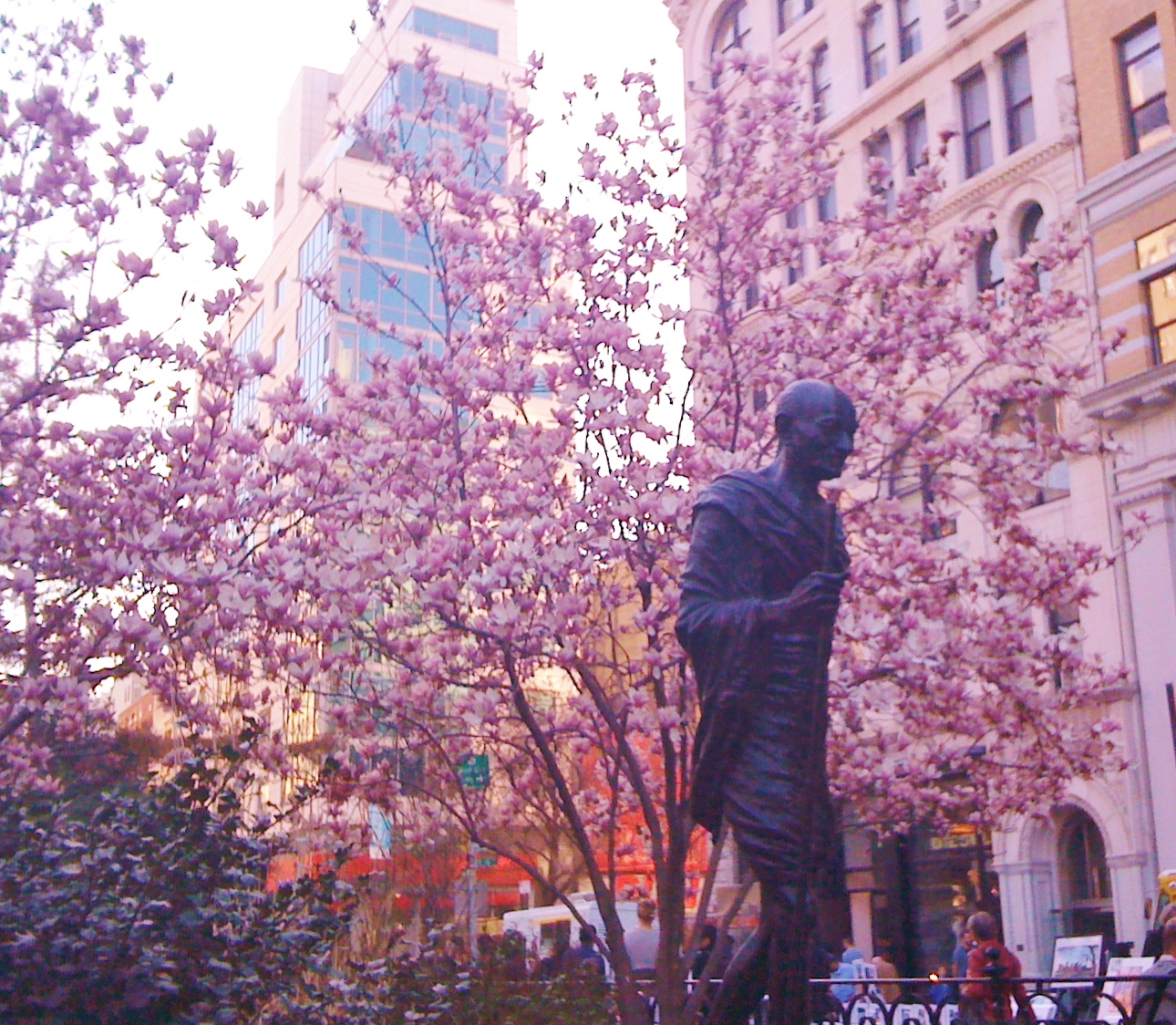 Magnolias open and gandhi walks union square nyc j j for Flowers union square nyc