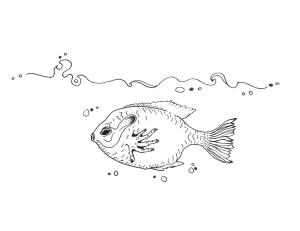 brindlefish24