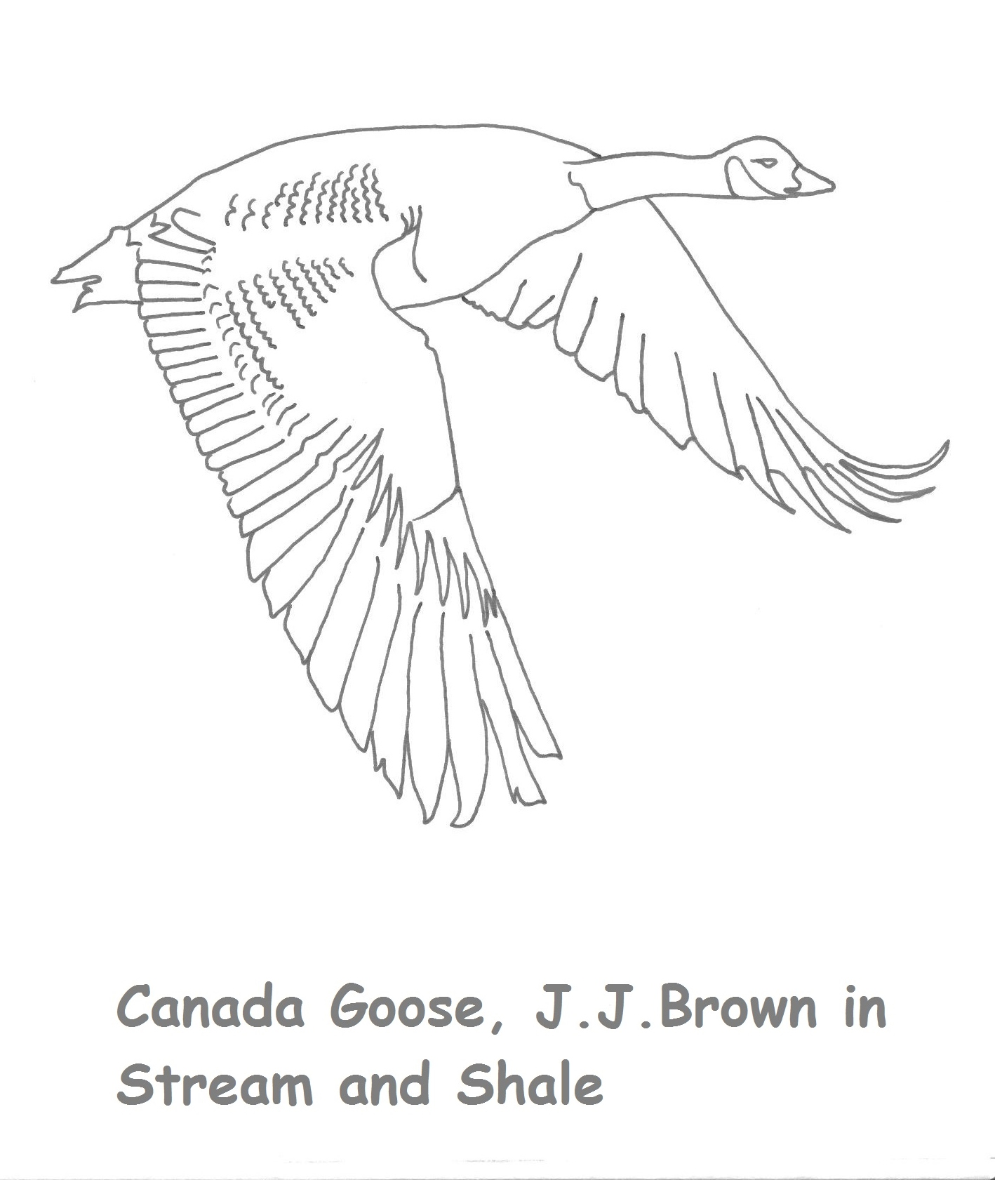 canada goose pictures to color