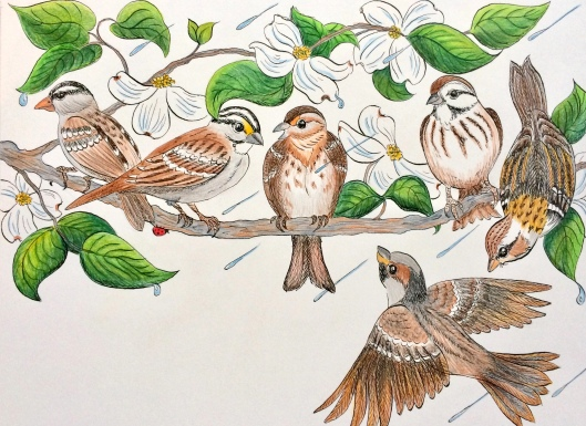 birdstalking
